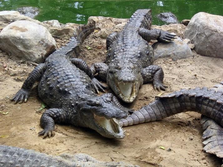 Crocodile Breeding Centre Phuentsholing