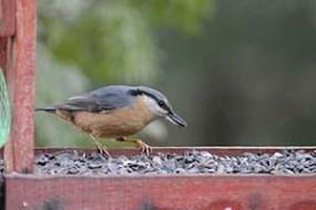 Csuszka a madáretetőben