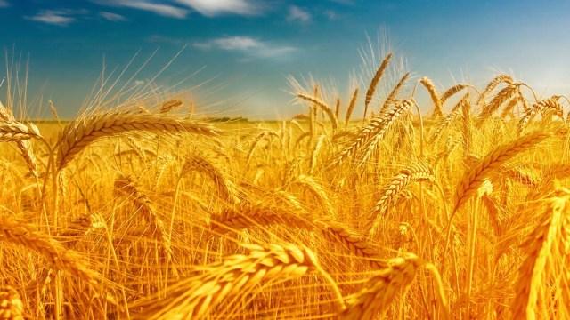 Украинский агроэкспорт в ЕС вырос на 41%