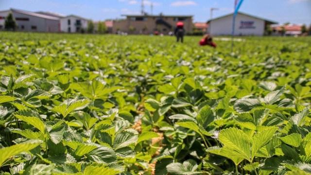 Эстонии нужно 2000 сезонных работников