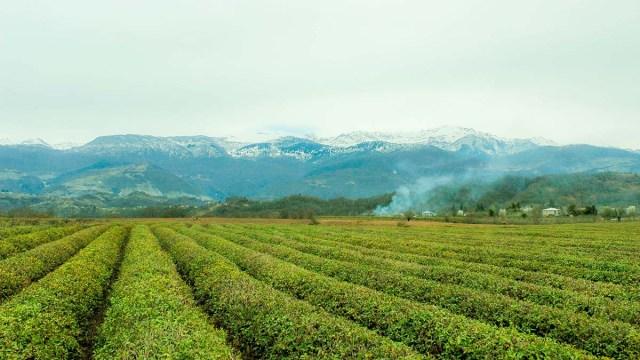Швейцария запускает программу поддержки сельского хозяйства Грузии