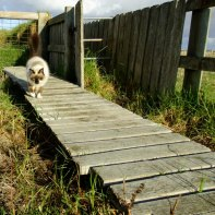catwalk3