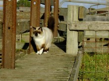 catwalk4