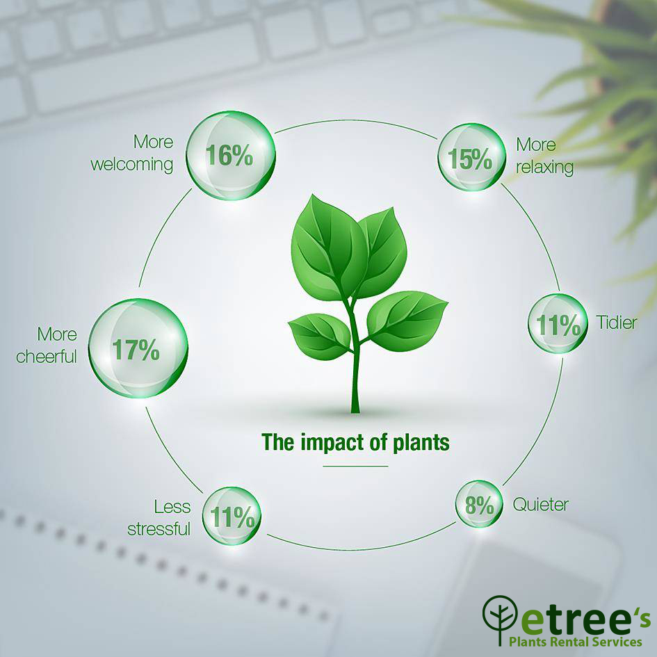 Do Office Plant Improve Productivity