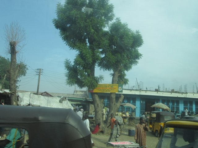 One of the many trees from where Boko Haram's snipers operated in the days of terror