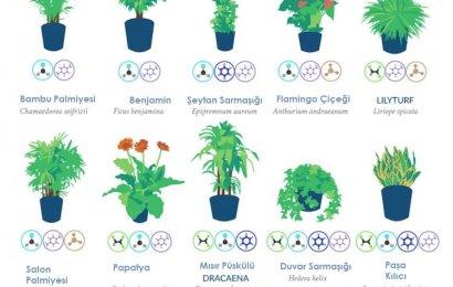 Ev ve Ofis için Havayı Temizleyen Bitkiler