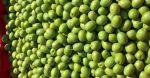 Νέες ανακοινώσεις για την ελιά Χαλκιδικής, άνευ κέρδους για τον αγρότη οι μέσες τιμές