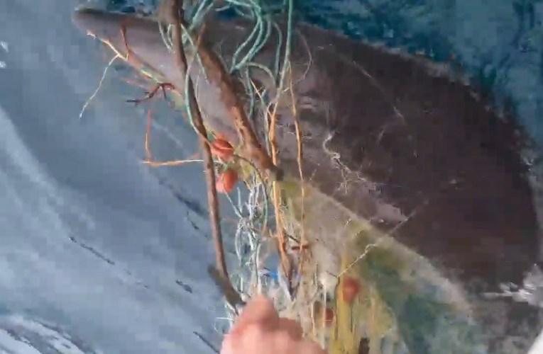 Χαλκιδική: Ψαράδες έσωσαν δελφίνι
