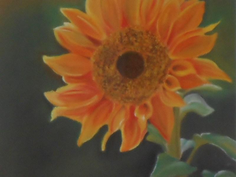 Natura - Fiori - Pastelli su carta