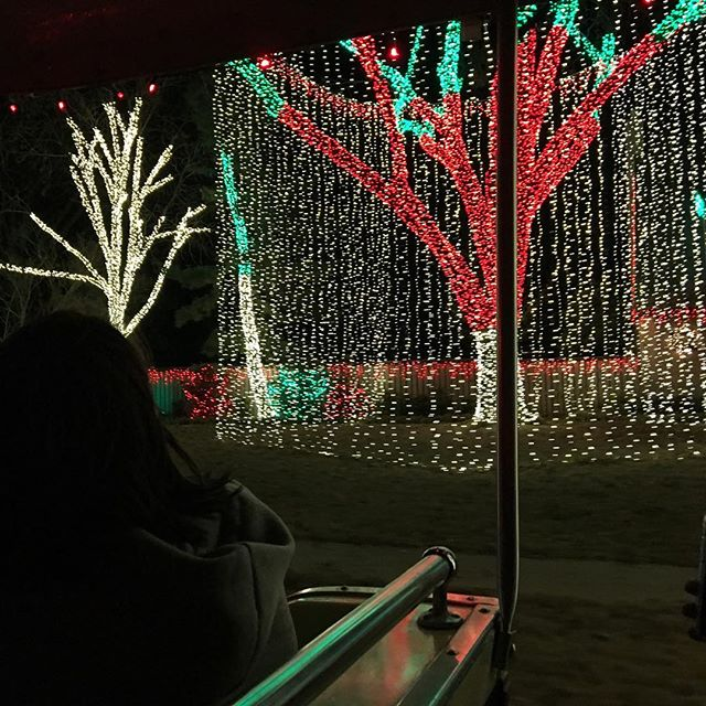 Destiny looking at some of the lights from The Polar Express.