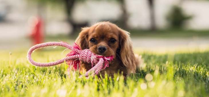 Playful Pooches: Keeping Your Dog Entertained 24/7