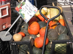 Squashes at the Greenmarket in early autumn.