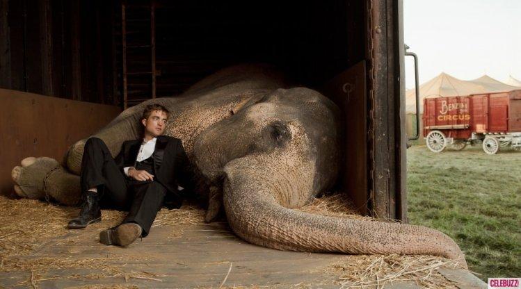 大象的眼淚 羅伯派汀森