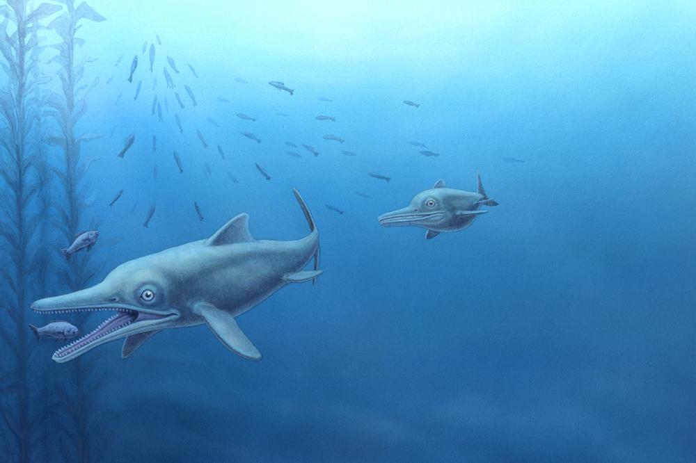 ichthyosaurus here s the ichthyosaurus