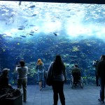 Huge aquarium wall!