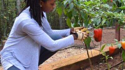 companion planting chard