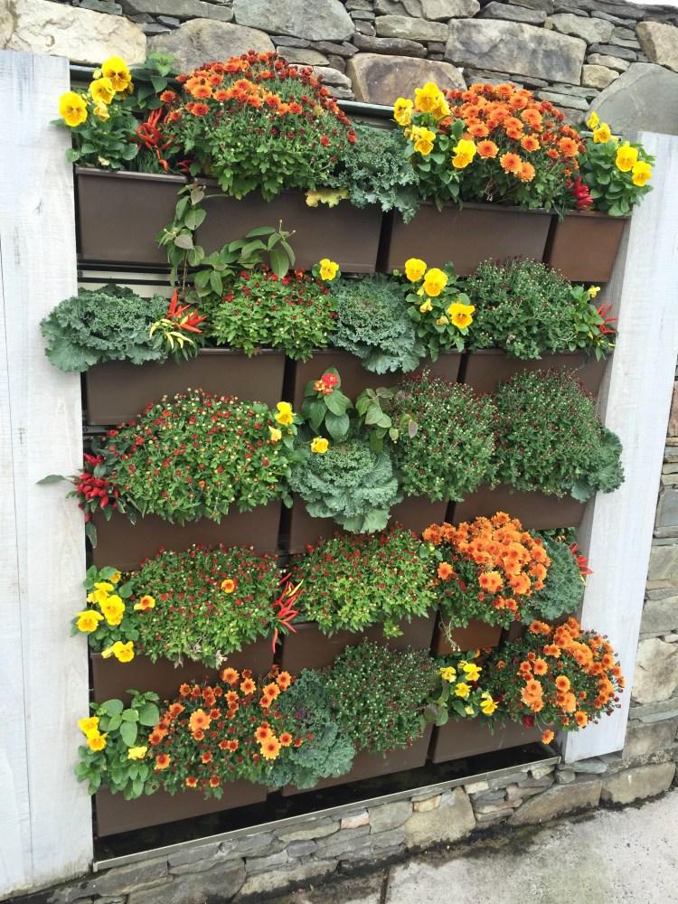 Autumnal flowers, Boston Massachusetts, USA © 2018 ericarobbin.com | All rights reserved.