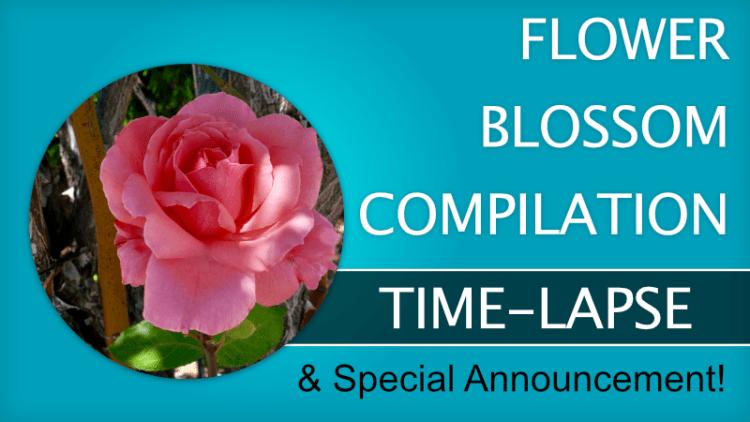 FLower blossom compilation thumbnail