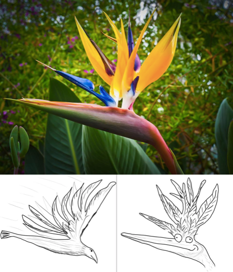 Wrong interpretation of the Bird of Paradise flower, photo courtesy of Reddit