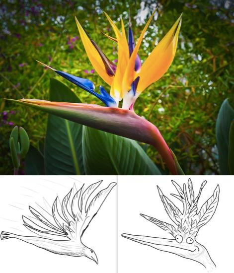 Wrong interpretation of the Bird of Paradise flower, photo courtesy of Reddit