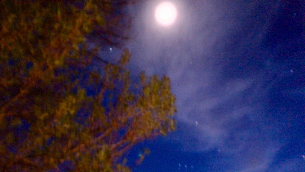 Full Moon, Orion, Betelgeuse Over Arizona © 2019 ericarobbin.com | All rights reserved.