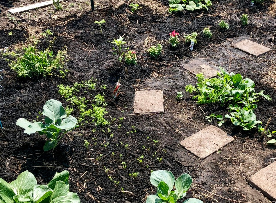Gardening © 2019 ericarobbin.com | All rights reserved.