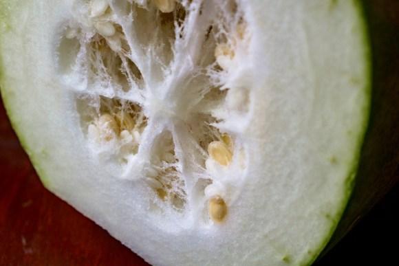 Winter Melon   Erica Robbin