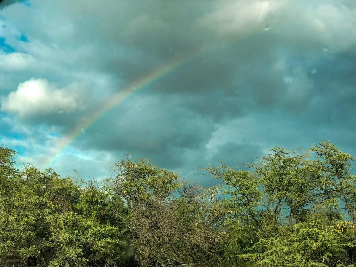 Maui Rainbow | Erica Robbin
