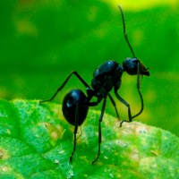 Bugs of Malawi: A Mob of Ants in My Garden