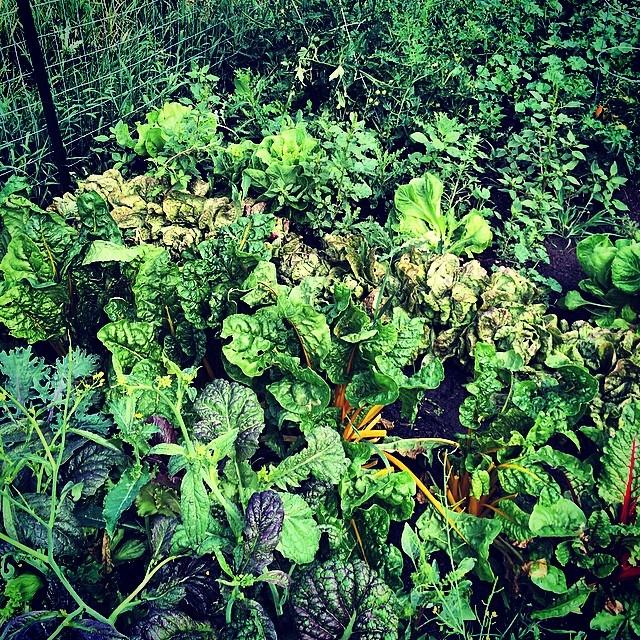 My Montana Garden, Bozeman, MT