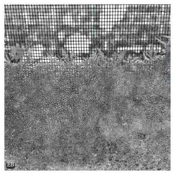 20150214-071735.jpg