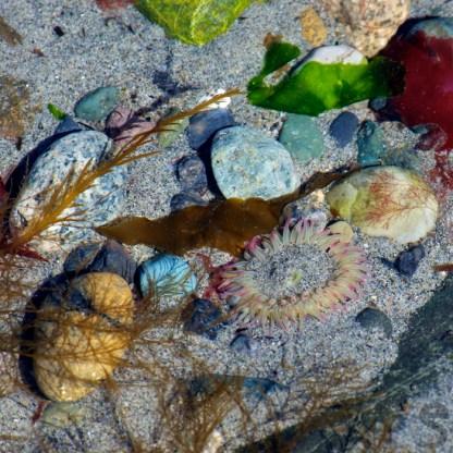 Turquoise, seaweed, anemone