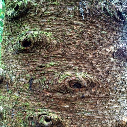 A tree looks like it has eyes