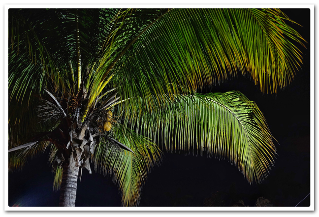 Arecaceae At Night