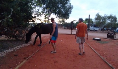 Bocce with horse