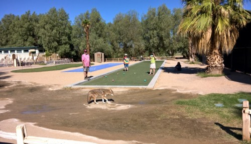 Bocce with coyote