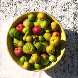 apples and quinces