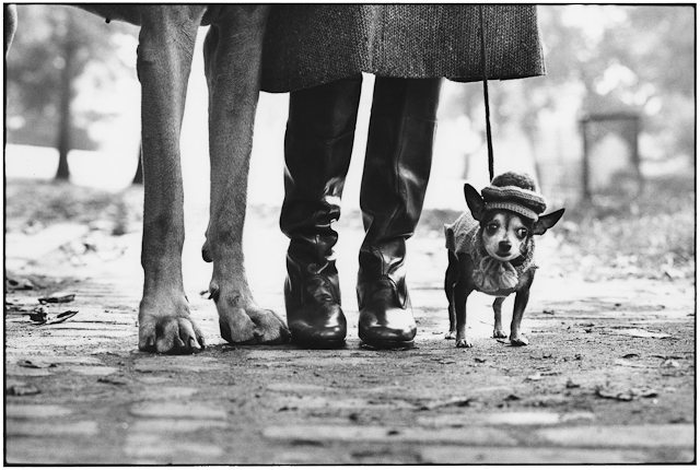 Elliott_Erwitt_USA_New_York_1974_Felix_Gladys_and_Rover_03