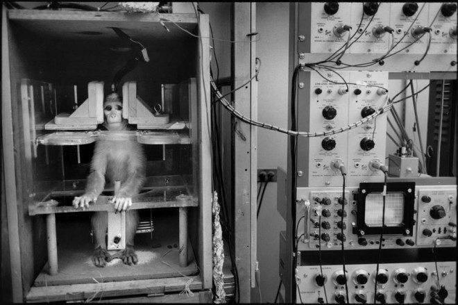 Henri Cartier-Bresson was always experimenting, shooting street photography, portraits, and even animals in a lab. USA. California. Berkeley University. 1967. Research laboratory. Copyright: Magnum photos / HCB Foundation