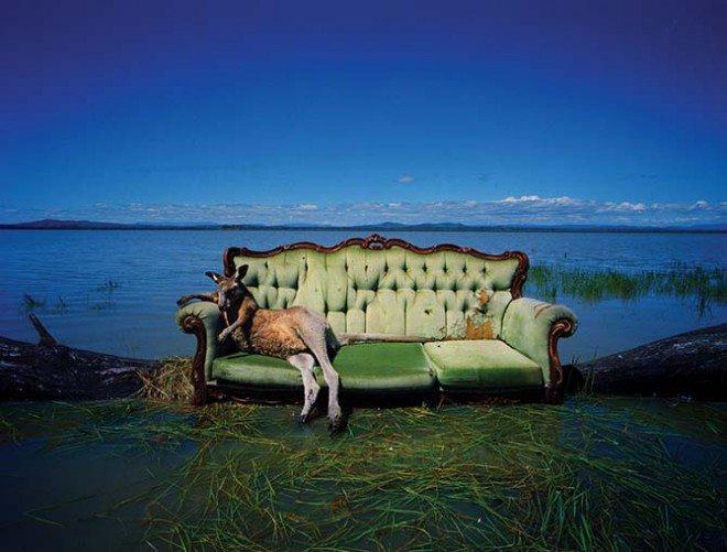 Roo on Sofa. Dean Sewell/Oculi