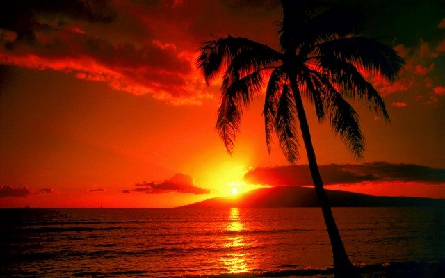 Warm colors of a sunset: Predominantly red, yellow, orange
