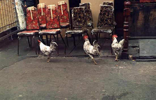 Helen Levitt / New York, 1980 (3 roosters)