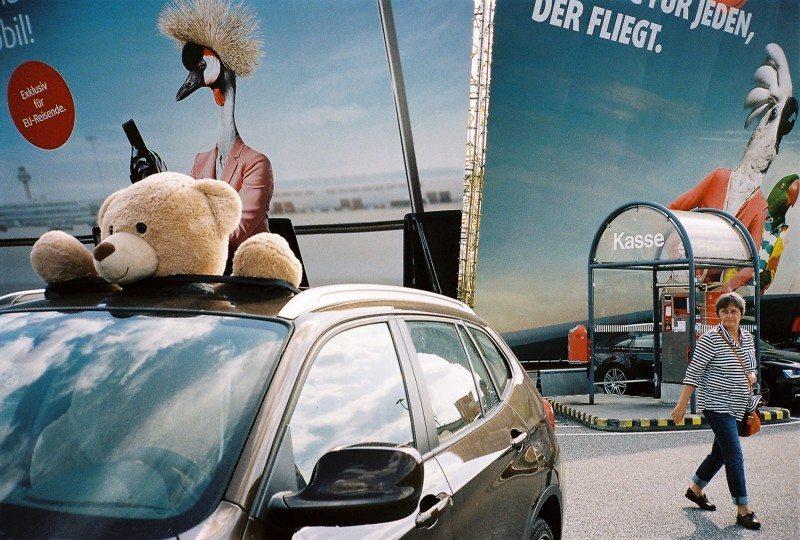 Bear in car