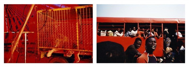 Note how these two images are paired according to colors (red) and also the analogy of the cage