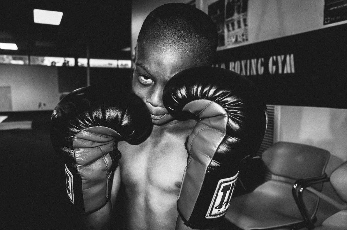 Gallo boxing. Lansing, 2014.
