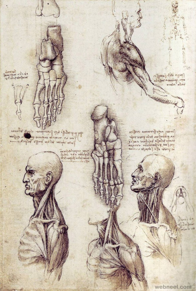 38-leonardo-da-vinci-anatomy.jpg