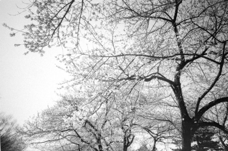 eric kim trees nature