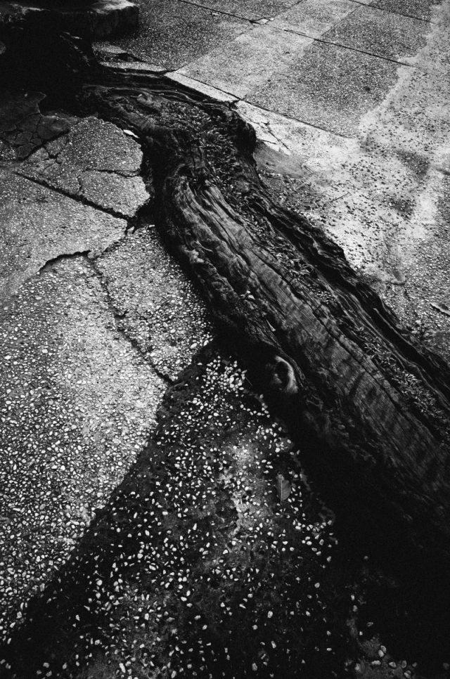 Tree trunk. Saigon. 2017