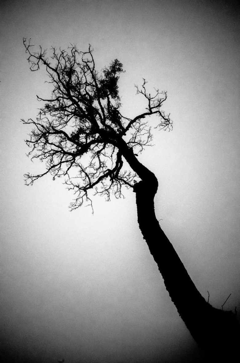 Tree. Sapa, Vietnam 2016