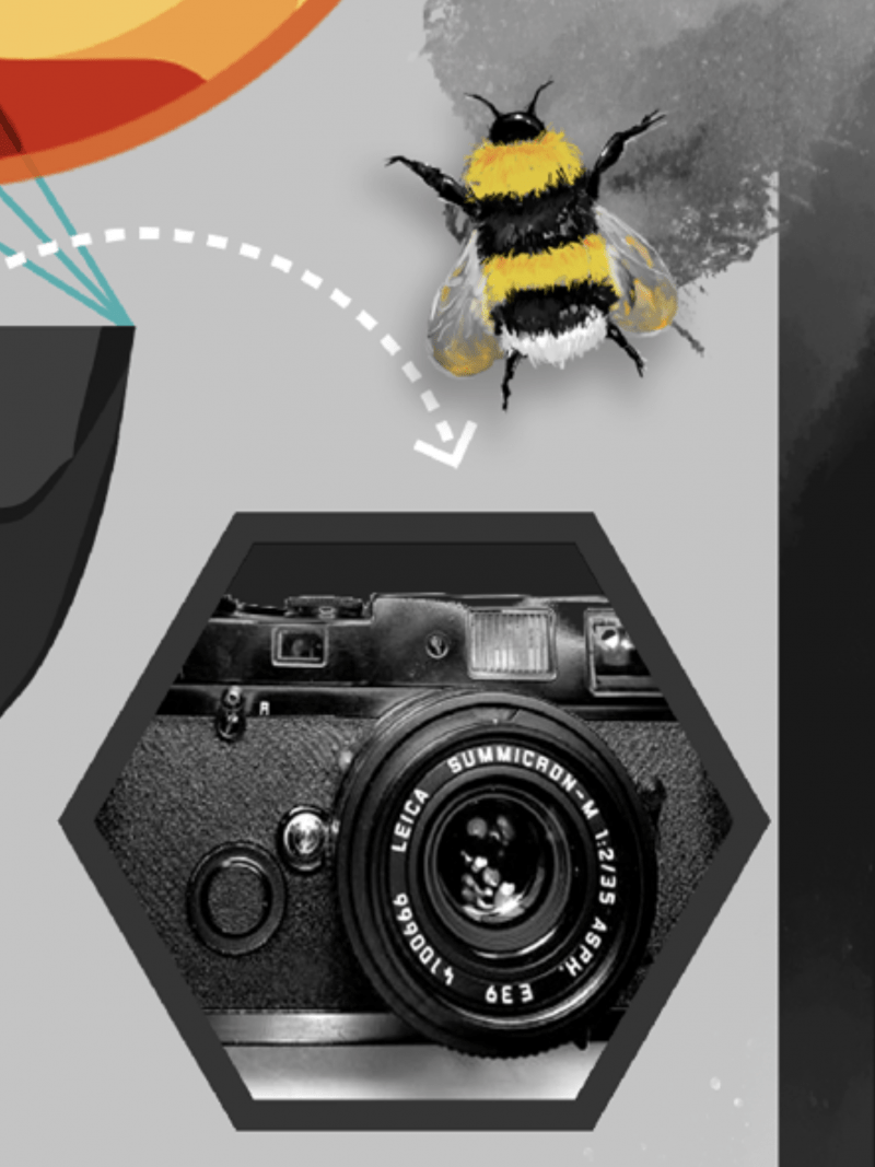 Bee and Leica.